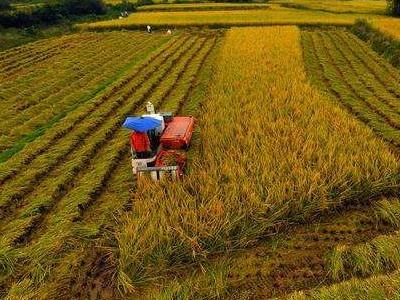 农业农村部:全国农村实用人才约2254万人