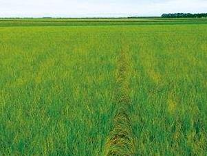浙江发布县域数字农业农村发展水平评价报告