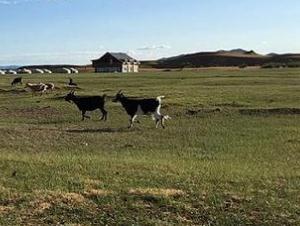 内蒙古:全力做好冬季农村牧区疫情防控工作