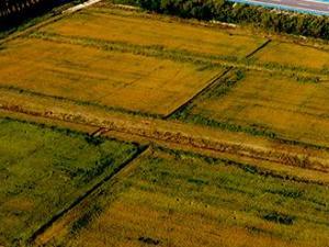全面推进乡村振兴,看今年宁夏三农工作如何发力?
