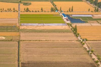 中央财政明确支持粮食生产一揽子政策